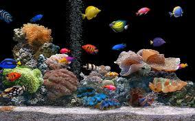 50 free 3d aquarium wallpaper on