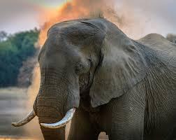 Imagini pentru imagini cu elefanti