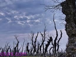 شجرة صور شجر غريب 2020 انواع الاشجار اشجار دائمة الخضرة صور خلفيات