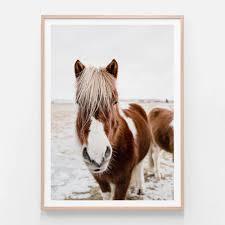 wild horse no 1 framed print or