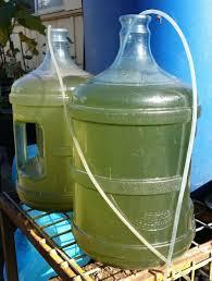 algae based co2 scrubber
