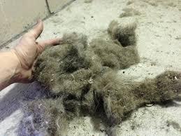 d dog smell citrusolution carpet