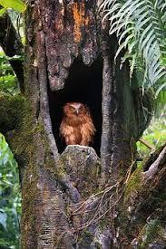 Bildergebnis für eulenwald pixabay