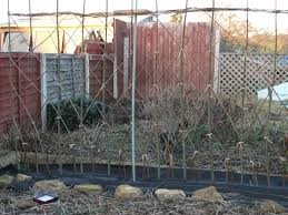 How To Create A Living Willow Hedge Steel Kitten