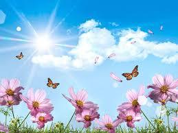 erflies and flowers wallpapers