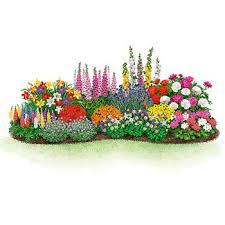 beginner s endless bloom perennial garden