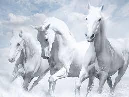 صور حصان رمزيات و خلفيات حصان بجودة Hd خيول عربية 30 سوبر كايرو