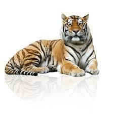 Tiger Wall Decals And Murals Wallmonkeys Com