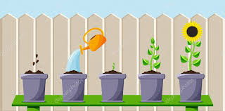 Cartoon Process Of Planting And Growing Flower Colored Flat Background Vector Design With Shadow Illustration For Bloom Plant Nature Garden And Eco Gardening Premium Vector In Adobe Illustrator Ai Ai