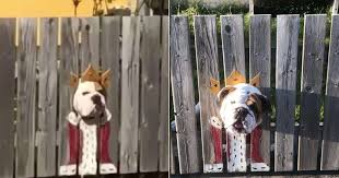 Dog Looks Like A King When He Sticks His Head Through The Fence The Dodo