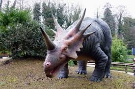 grey triceratops statue free image peakpx