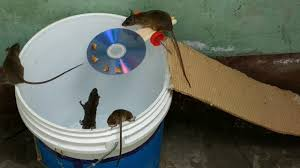 mouse trap i ve ever seen