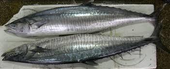 Image result for توثيق 1000 نوع من الأسماك في مياه السلطنة