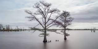Louisiana S Disappearing Coast The New Yorker