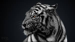 267 White Tiger Hd Wallpapers Background Images Wallpaper Abyss