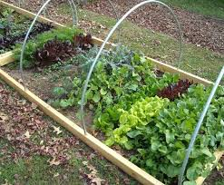 vegetables that need shady space for