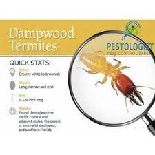 Termite Pest Control Service in India