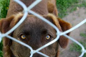 How To Make Your Gate Safe For Your Dog The Trupanion Blog