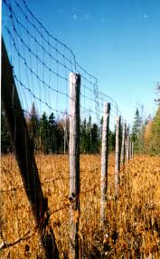 Https Www Canr Msu Edu Uploads Files Research Center Fbic Tree Protection Reducing Deer Damage To Forest Crops Pdf