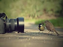 صور Hd روعه الدقة العالية والابداع تجدها فى صور الhd اروع روعه