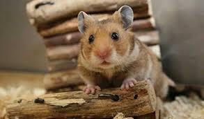 accessoires de la cage du hamster