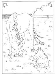 Kleurplaat Op De Manege In De Wei Met Veulentje Paarden Dieren