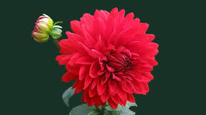 beautiful flowers images for s