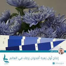 إنتاج أول زهرة أقحوان زرقاء في العالم Biologist أنا