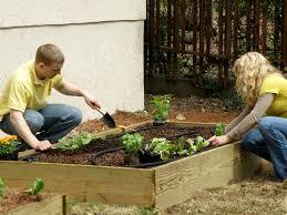 super easy raised bed bonnie plants