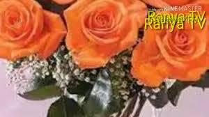 أجمل صور ورد لون برتقالي Youtube