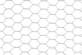 1 502 Chicken Wire Stock Photos Pictures Royalty Free Images Istock