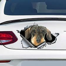 Amazon Com Wire Haired Dachshund Car Decal Dachshund Sticker Vinyl Sticker For Cars Windows Walls Fridge Toilet And More 11 Inch Home Kitchen