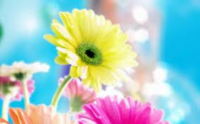 خلفيات زهور مناظر ورود بديعه جدا مساء الورد