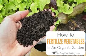 how to fertilize a vegetable garden