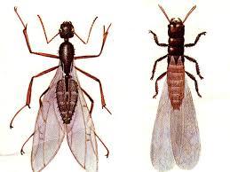 Get Big Termite Looking Bug Background