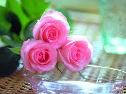 صور ورود الربيع2020 صور ازهار الحب صور جميلة للورد2020 صور ورود