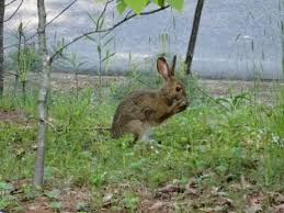 keeping groundhogs and rabbits out of