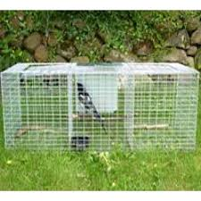 ln trap magpie grey crow trap