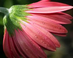 خلفيات زهور شاهد اجمل خلفيات زهور روح اطفال