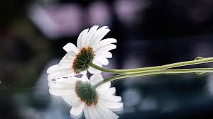 صور ورد Hd احلي الوان ورد باقات زهور جميلة 33 سوبر كايرو