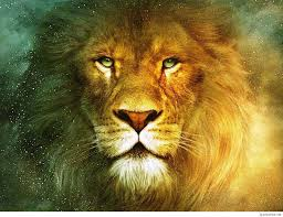 awesome lion hd wallpapers 1080p high