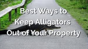 How To Keep Alligators Out Of Your Yard And Pool All The Best Methods Dailyhomesafety