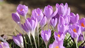 Znalezione obrazy dla zapytania: wiosna obrazki