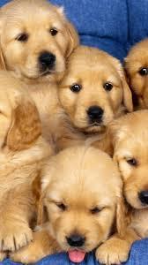 puppy live wallpaper