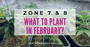 what to plant in february zones 7 8