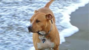 Summer Fun: Los Angeles Dog-Friendly Hikes   Angel City Pit Bulls ...