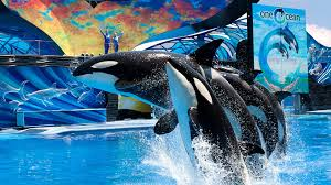 ticket options available for seaworld