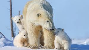 three small cubs desktop wallpaper hd