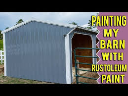 How To Choose The Best Barn Paint Horses Foals