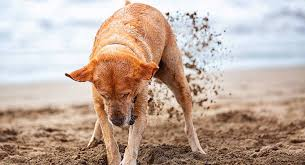 How To Stop A Dog From Digging Why Do Dogs Dig Holes